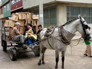 naar-school-met-paard-en-wagen